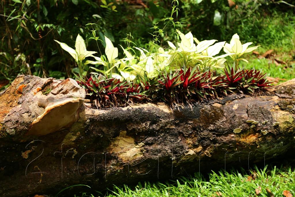 Botanical Garden 14