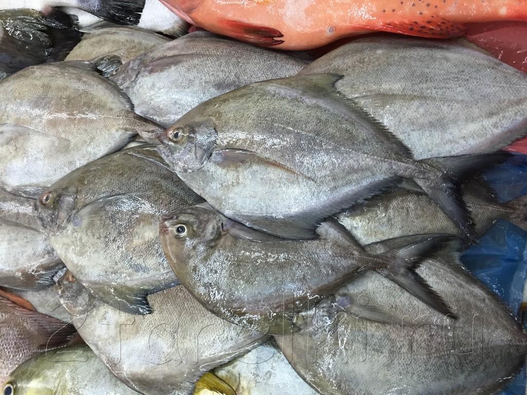 Рыба на зеркале как готовить