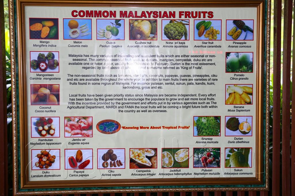 фруктовая ферма 1