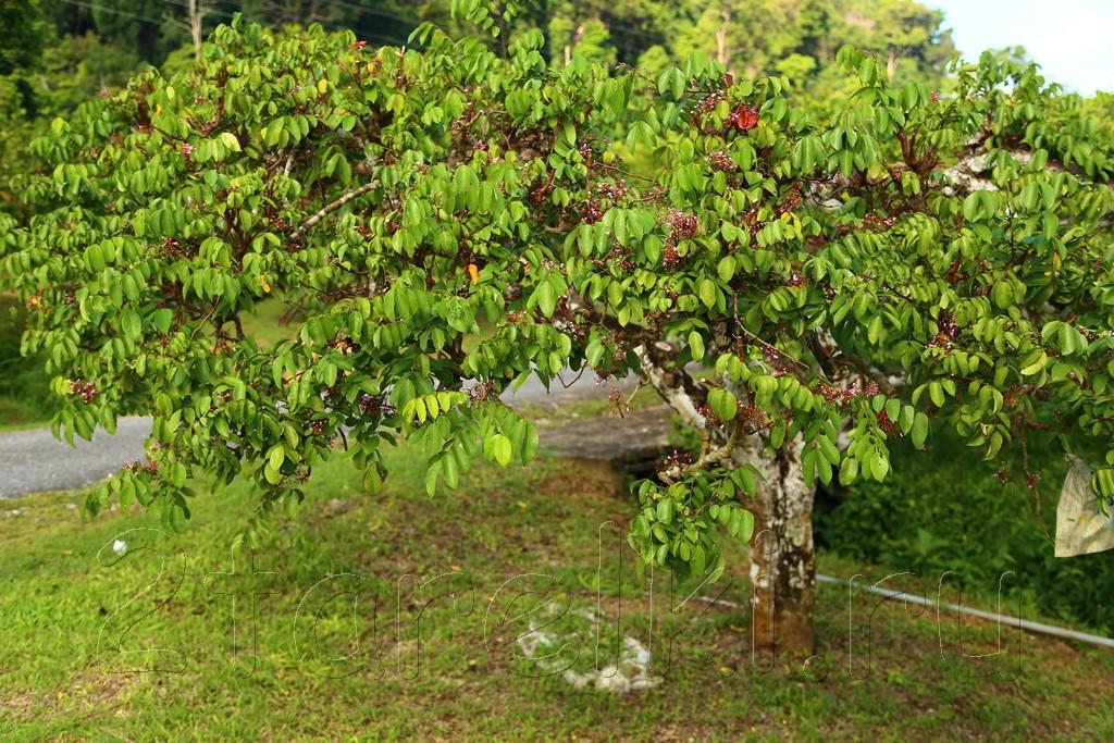 фруктовая ферма 5