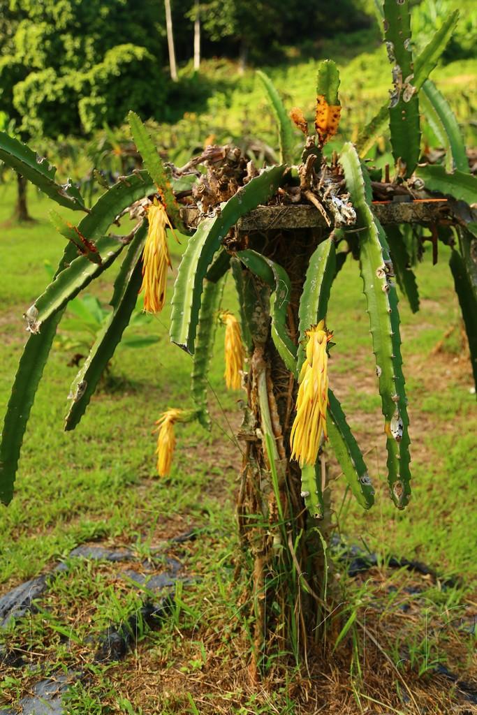 фруктовая ферма 6
