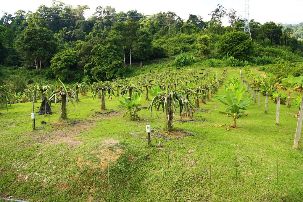 фруктовая ферма 7