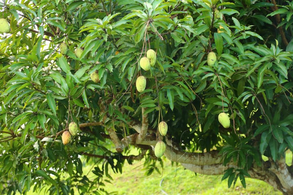 фруктовая ферма 9