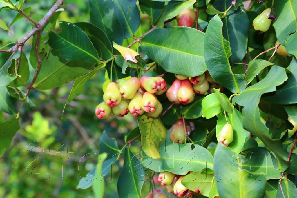 фруктовая ферма 11