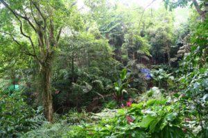 Tropical Spice Garden на острове Пенанг. Тропические растения.