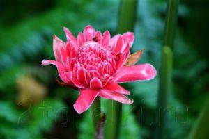 Tropical Spice Garden на острове Пенанг. Тропические цветы.