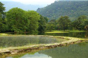 Тайпинг. Парк озер и необыкновенные деревья.